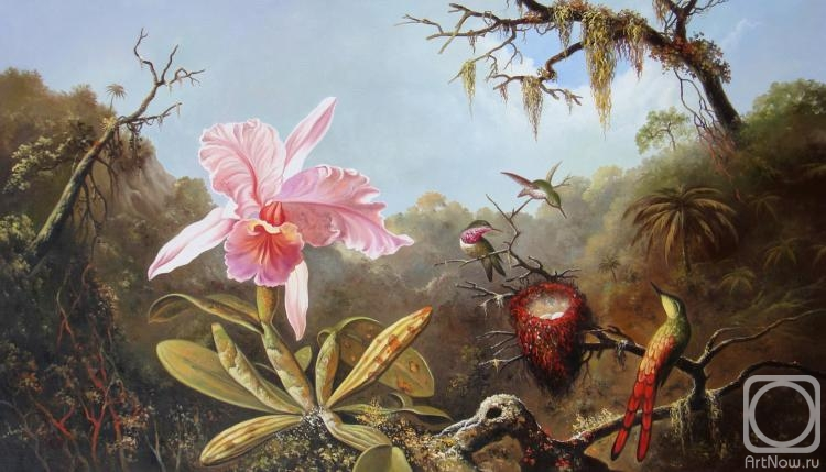 cattleya orchid and three brazilian hummingbirds Martin johnson heade, cattleya orchid and three brazilian hummingbirds, 1871, floral art, exotic birds, antique, 11x14 cotton canvas print colors will vary due to your monitor settings free ship us this art print was taken from a vintage painting, print, postcard or digital.