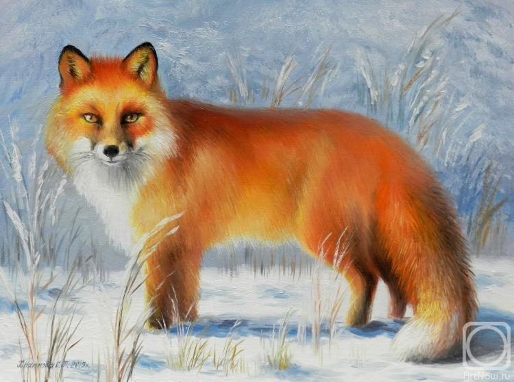 Обыкновенная лисица  Википедия