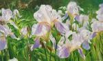 Zhaldak Edward. Irises