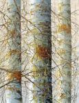 Kustanovich Dmitry. Birches
