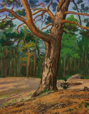 Rumiyantsev Vadim. Pine on the seashore