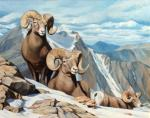 Bighorn sheep. Sumin Denis