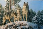 Три волка. Данчурова Татьяна