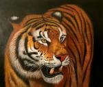 Tiger. Bruno Augusto