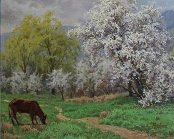 April, flourishing of wild plume cherry in Kutais. Pojidaev Oleg
