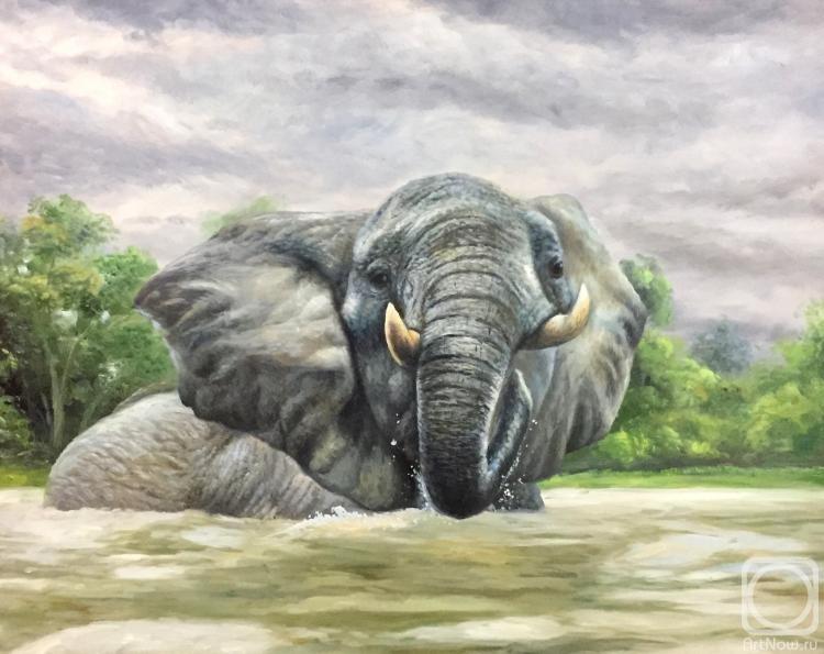 Бруно Тина. Слон