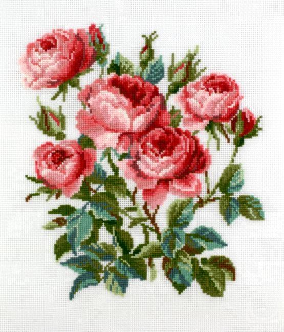 Храпкова Светлана. Розы