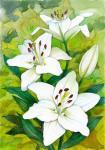 Актуганова Дина. Белые лилии