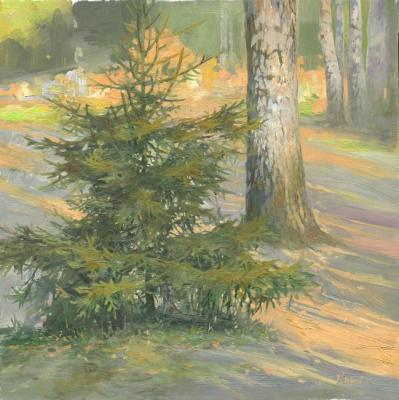 Young Fir Tree. Chernov Denis