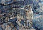 snow leopard among the rocks