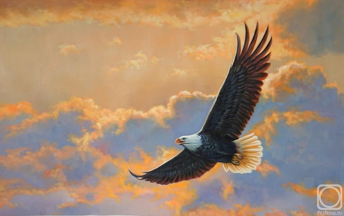 разы затрудняет картины и фото орла в полете этих цветов