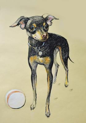 The toy Terrier 2. Lutokhina Ekaterina