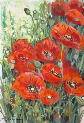 Poppies. Schubert Albina