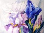 Mikhalskaya Katya. Irises in the sun