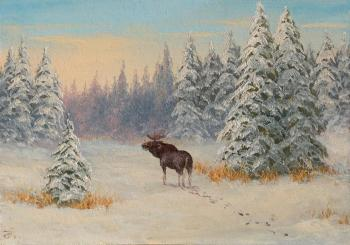 Lonely elk
