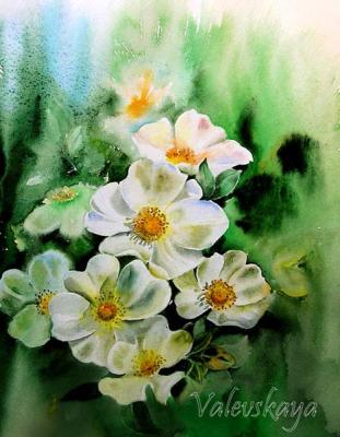 White dog rose. Valevskaya Valentina