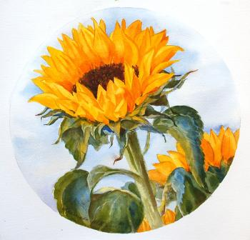 Krasnova Yulia. Sunflower