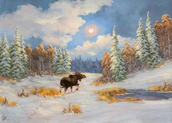 Elk, winter night