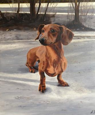 portrait of a dog. Zameliukhina Anna