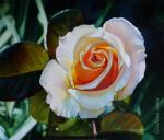 Grechina Anna. Rose painting