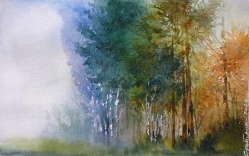 Fog in a pine forest.