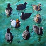Sea ducks. Simonova Olga
