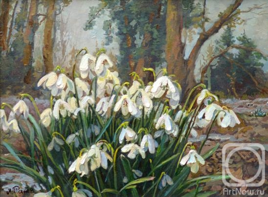 Panov Eduard. Snowdrops in the forest
