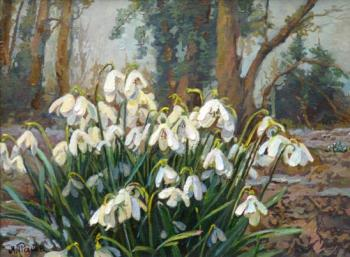 Snowdrops in the forest. Panov Eduard