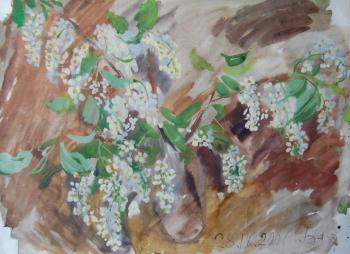 Bouquet of bird cherry. Dobrovolskaya Gayane
