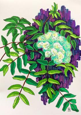 Flower of mountain ash. The sketch