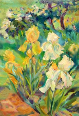Irises. Sun day (Bushes). Mirgorod Irina