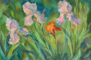 Irises. Minuet at sunset
