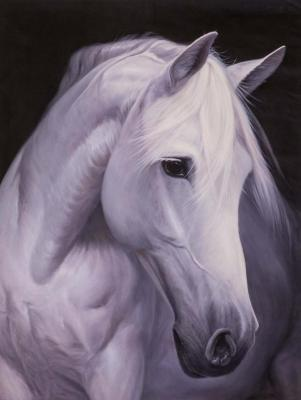 Portrait of a white horse. Kamskij Savelij