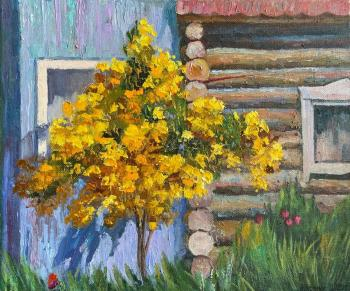 Blooming yellow Bush. Chernyy Alexandr