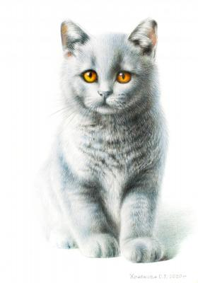 British blue kitten. Khrapkova Svetlana