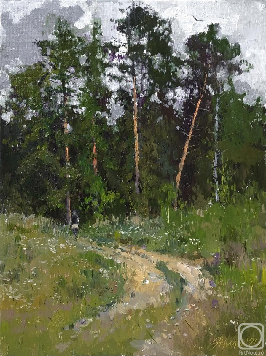 Zhilov Andrey. Pines by the clearing