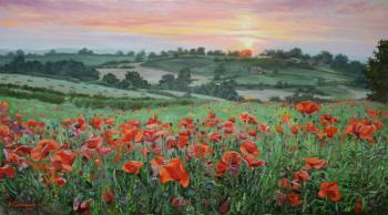 Red poppies in the field green. Samokhvalov Alexander