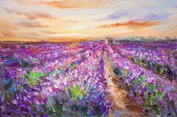 Lavender fields at sunset N3. Rodries Jose
