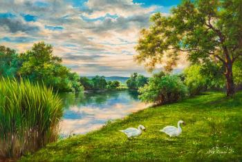 Swans on the river bank. Romm Alexandr