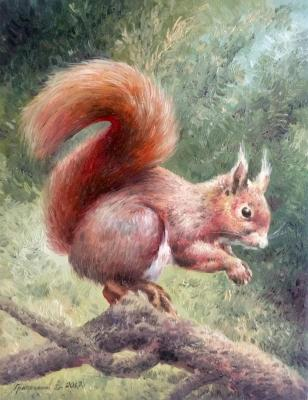 Squirrel. Gribennikov Vasily