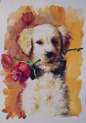 Labrador puppy and rose. Simonova Olga