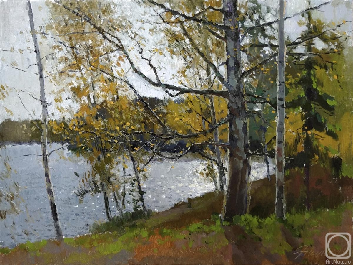 Zhilov Andrey. Study with an old birch