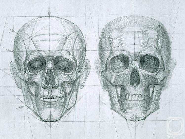 """Юдаев-Рачей Юрий.  Схема построения рисунка человеческого черепа.  Ключевые точки и череп  """"как он есть """" ."""