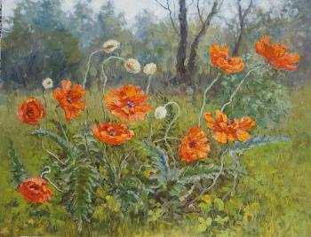 Red poppies. Filippov Vladimir