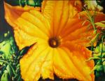 Grechina Olga. Pumpkin flower