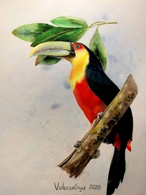 Red-breasted toucan. Valevskaya Valentina