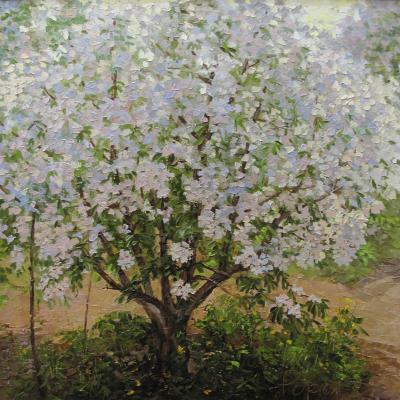 Apple tree (Garden Flowers). Popova Irina
