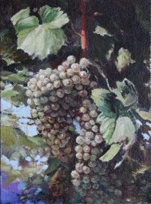 A branch of grapes. Ilin Vladimir