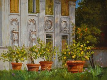 Citrus trees at villa Borghese. Anikin Aleksey