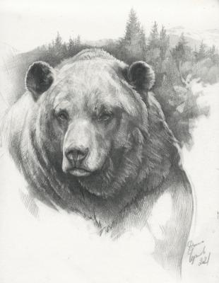 Bear Grizzly. Chernov Denis